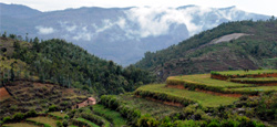 Kodaikanal Tour Package from Coimbatore