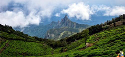 Ooty - Munnar Tour Package from Coimbatore