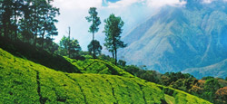 Ooty Hill Station Tour Package from Coimbatore